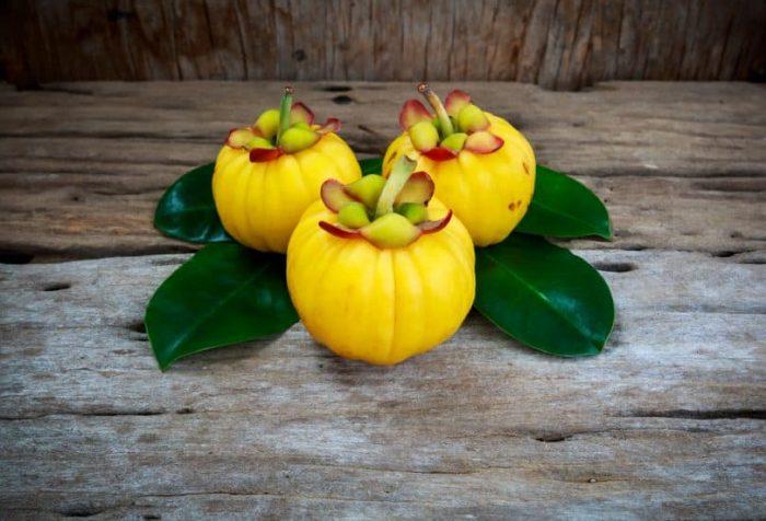 Quels sont les propriétés du garcinia cambogia?